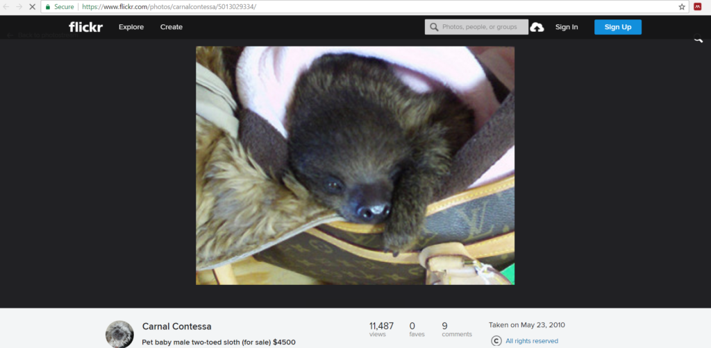 """""""Carnal Contessa"""", the founder of the Zoological Wildlife Conservation Center, selling a baby sloth online"""