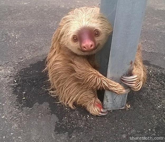 sloth-crossing-the-road
