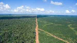 POSCO-Daewoos-palm-oil-concession-in-Papua-Indonesia