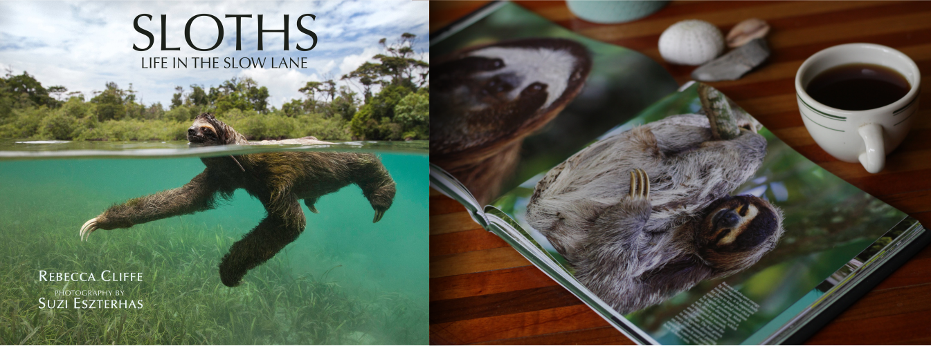 best sloth book