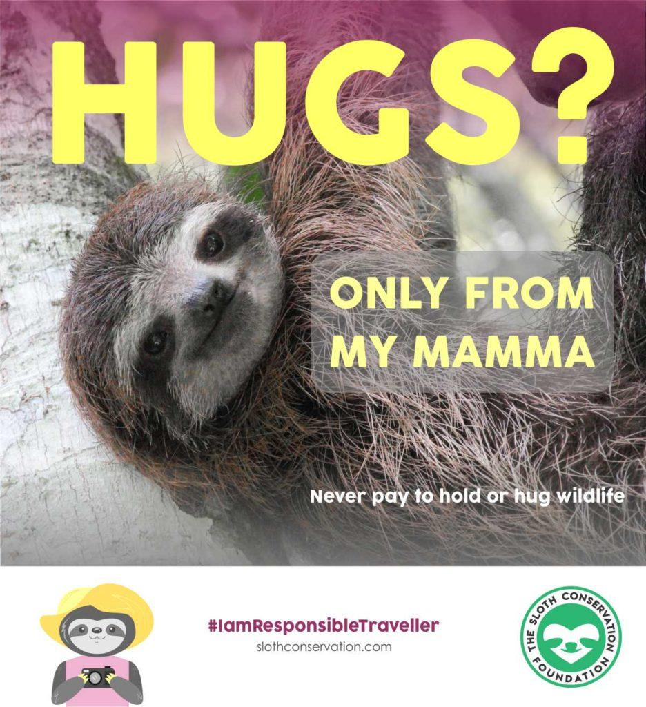 hug baby sloth