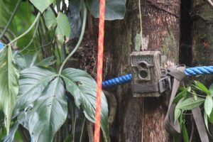 camera trap on a sloth crossing