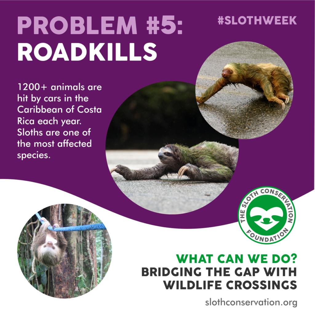 sloth problems