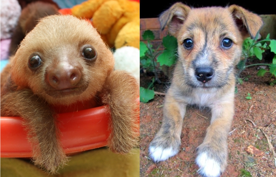 Cute baby sloth and dog puppy