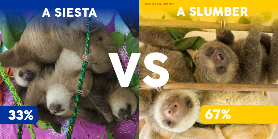 sloth versus