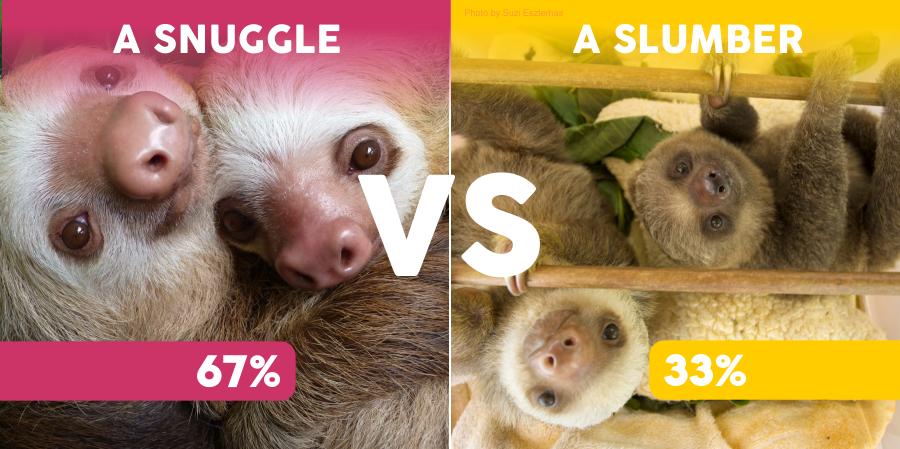 snuggle versus slumber