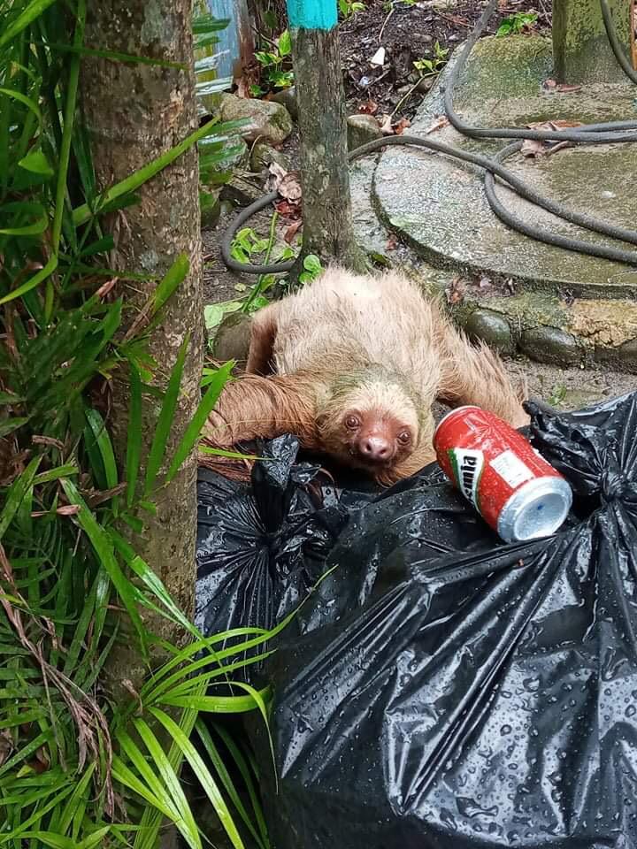 sloth problem