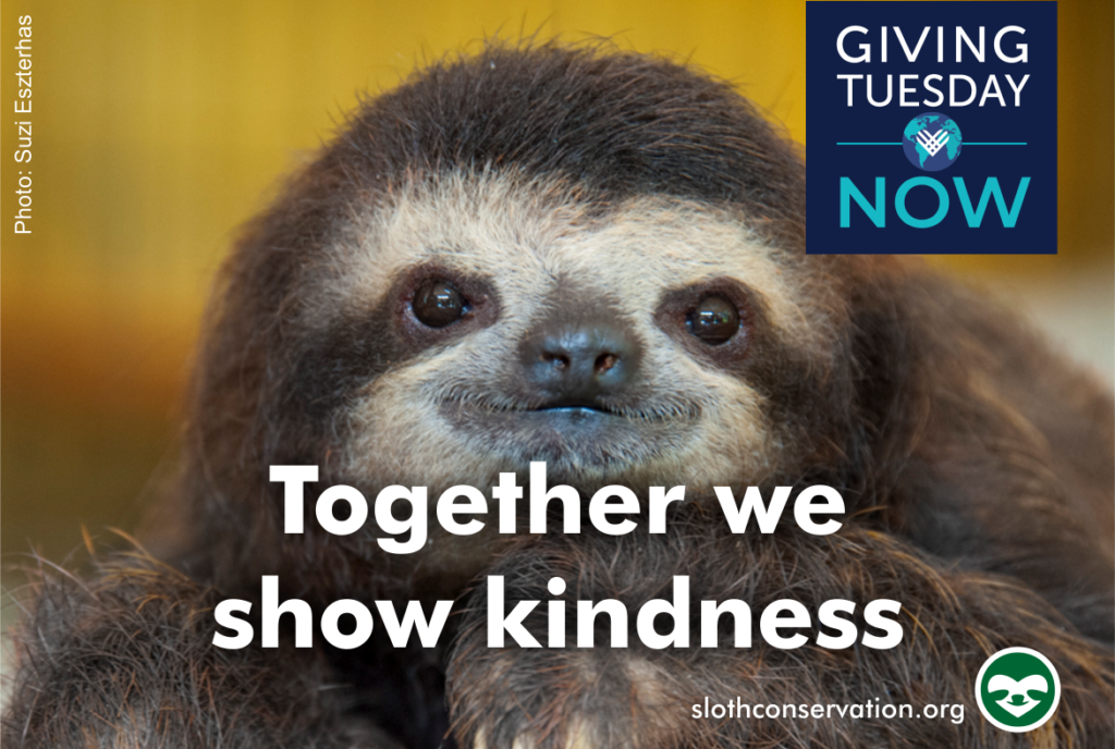giving tuesday sloth conservation