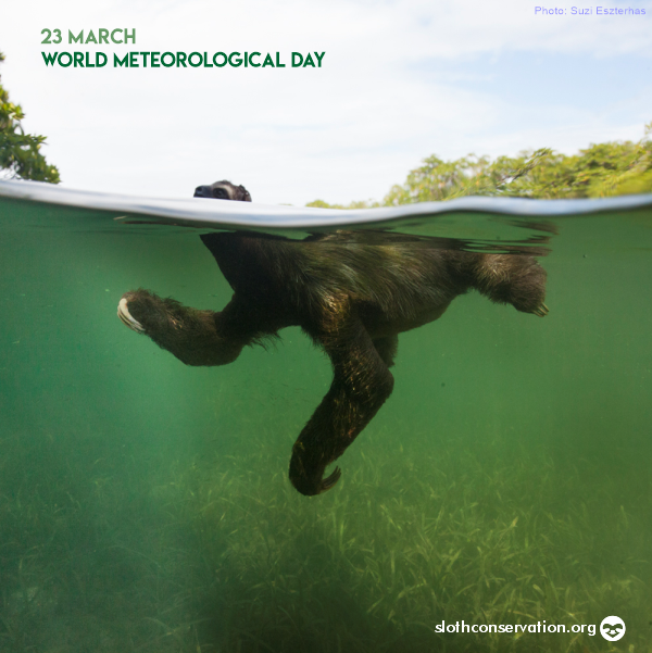 23 meteorological day
