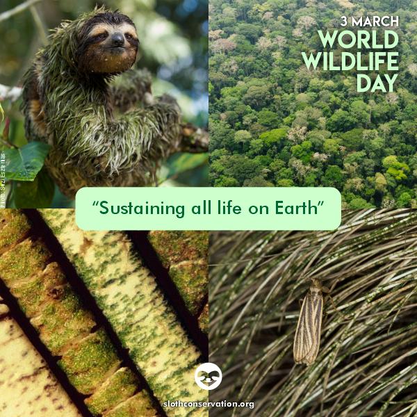 march 3 World Wildlife Day