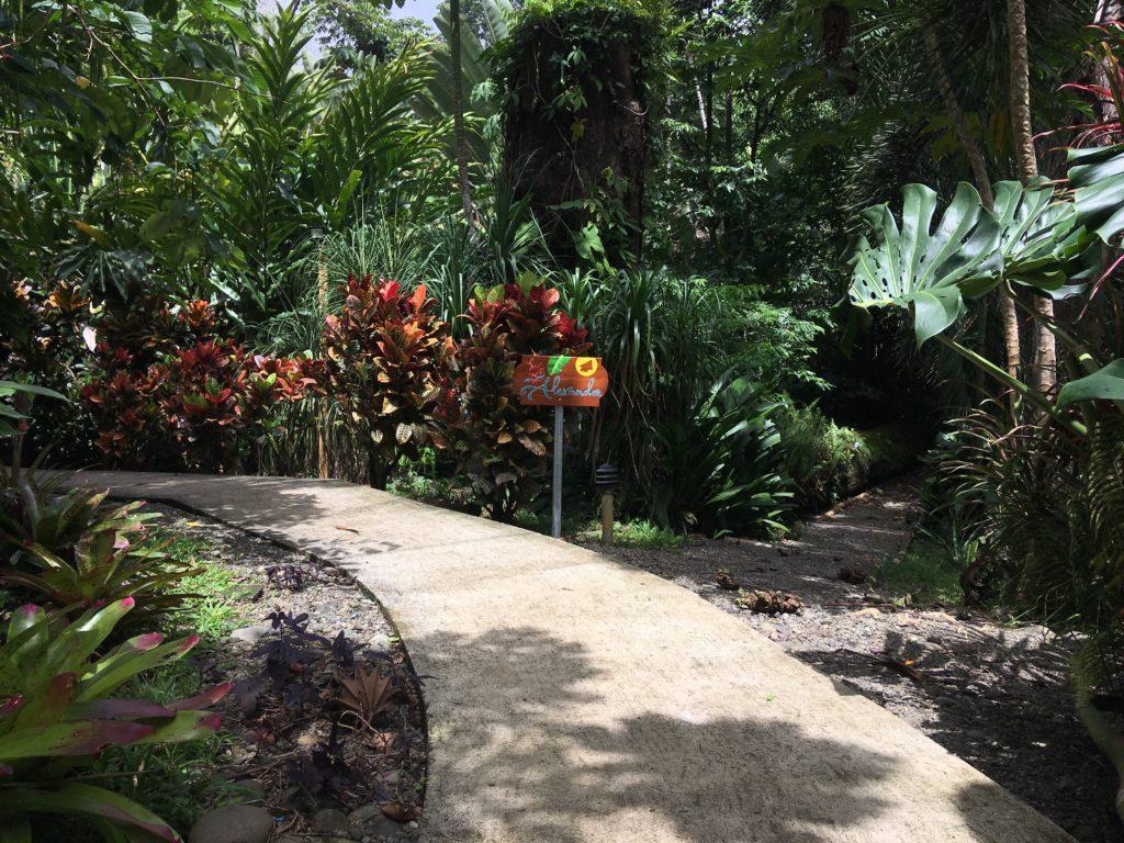 wildlife bridge at south caribbean
