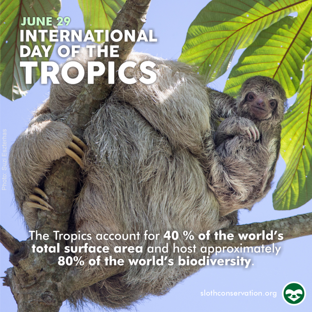 june tropics day social media sloths