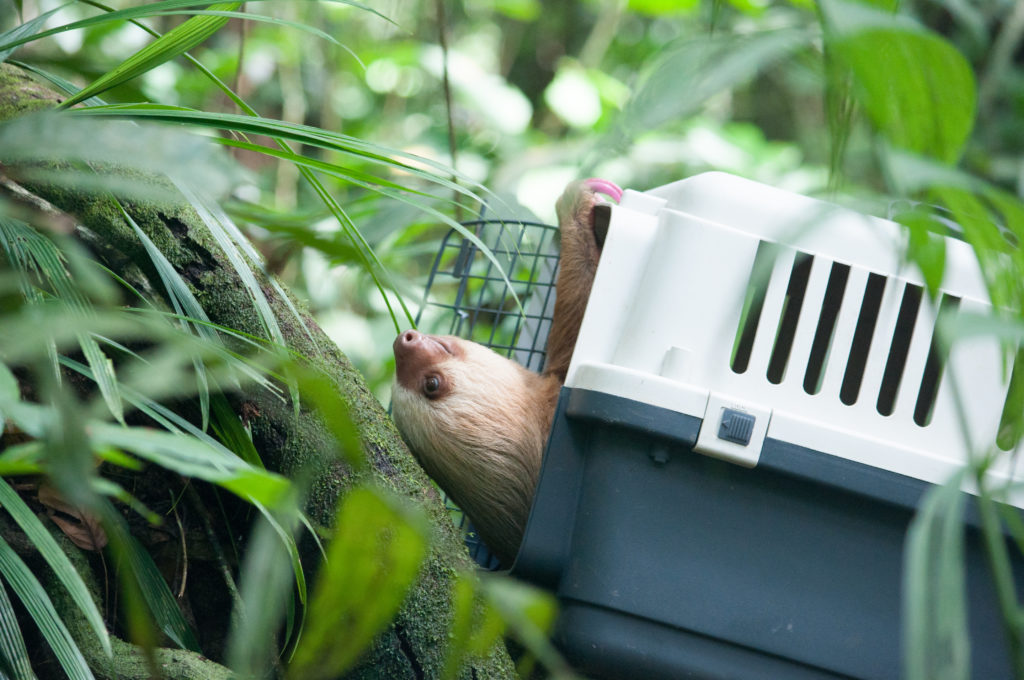 sloth release