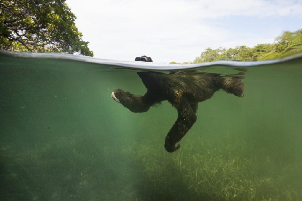 sloth floating