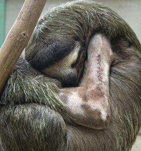 Skkiny sloth facts suzi eszterhas