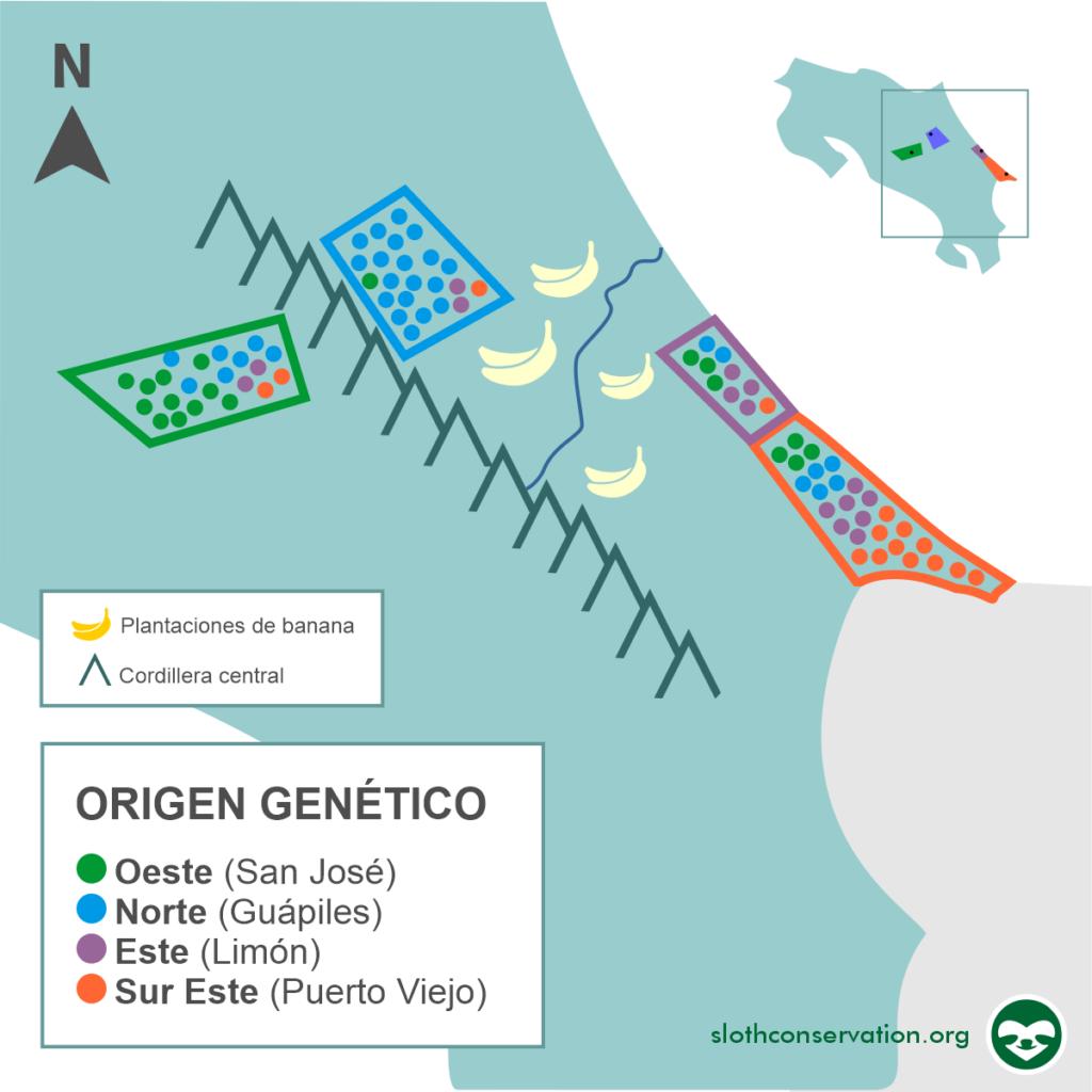 genetica de perezosos costa rica