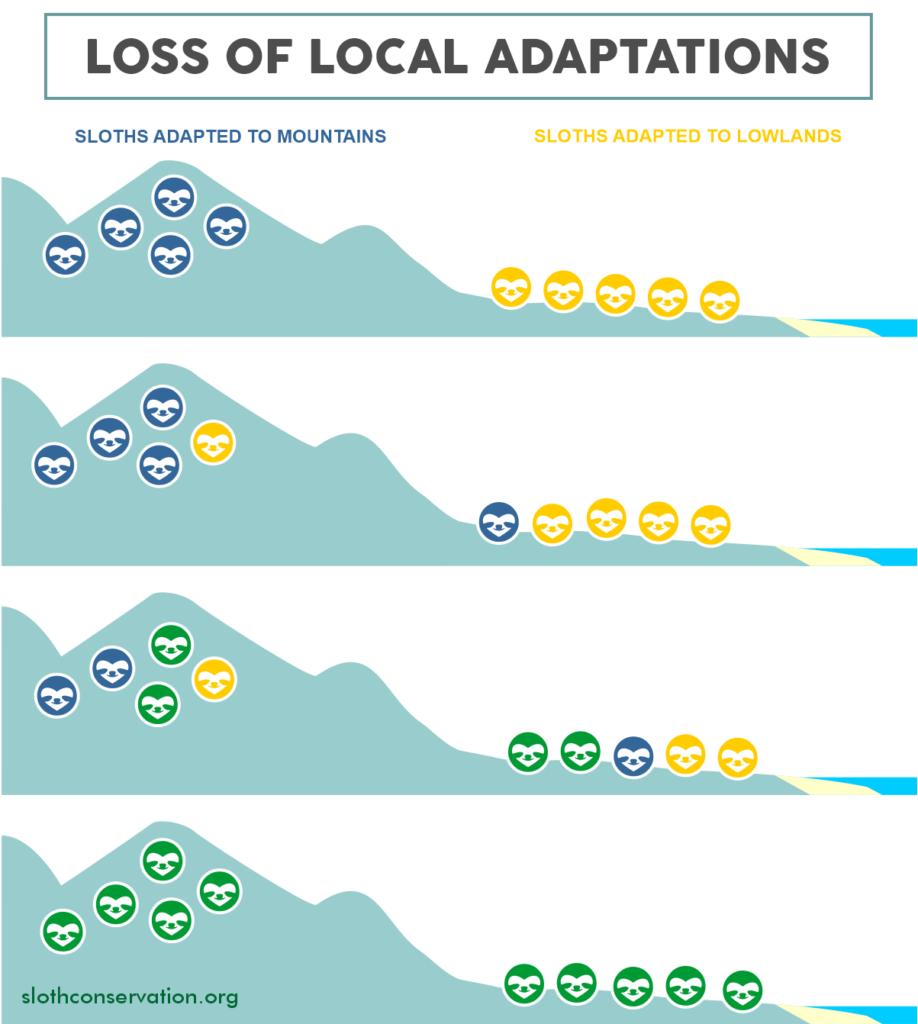 loss of local adaptations