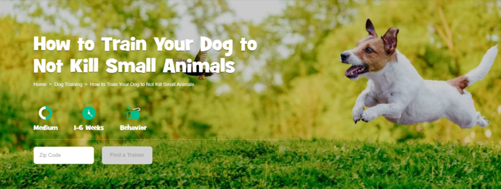 Dog running through grass chase small animals