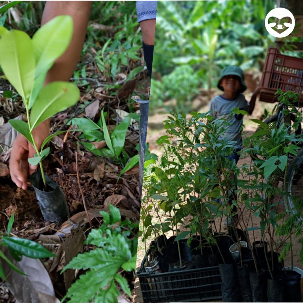 Connected gardens reforestation updates