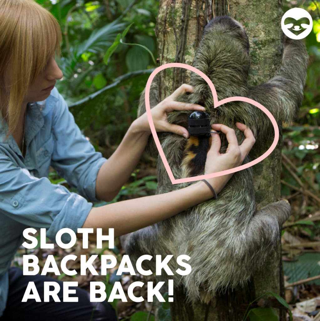 sloth research updates