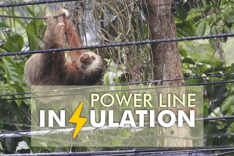 power line sloth