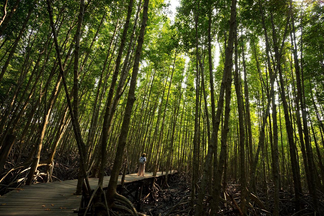 mangroove wetland