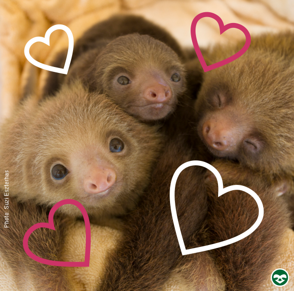 sloth lovers