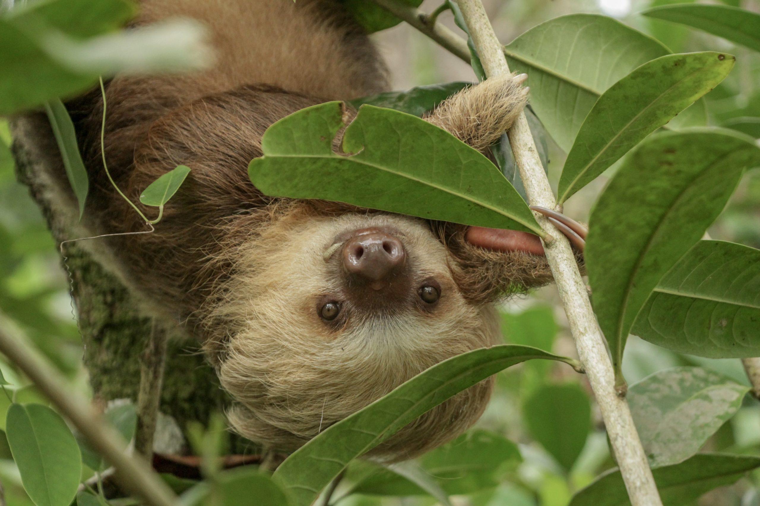 sharon urban sloth