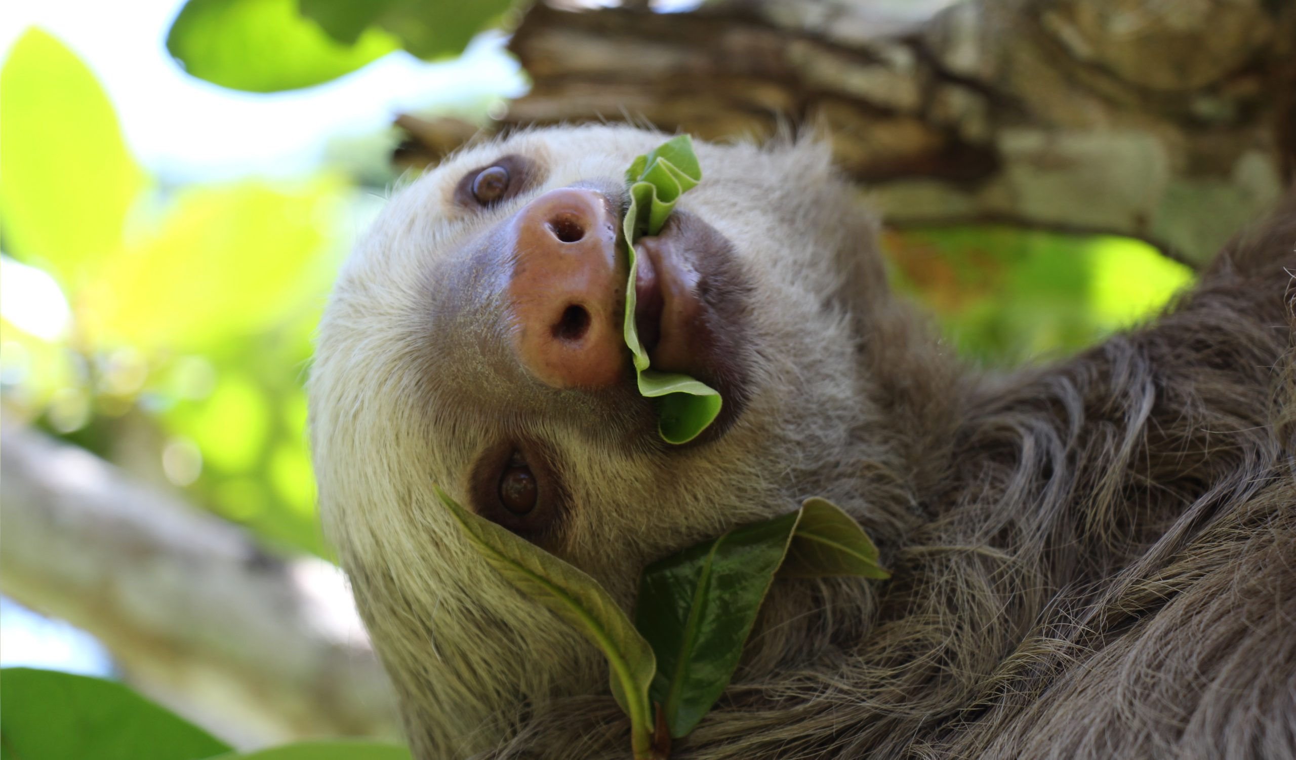 eating leaves