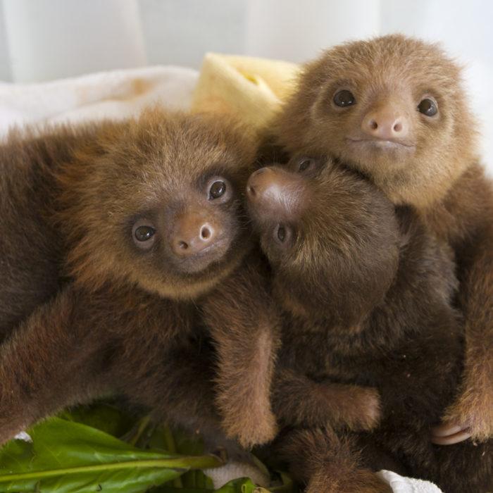 baby slotu cute