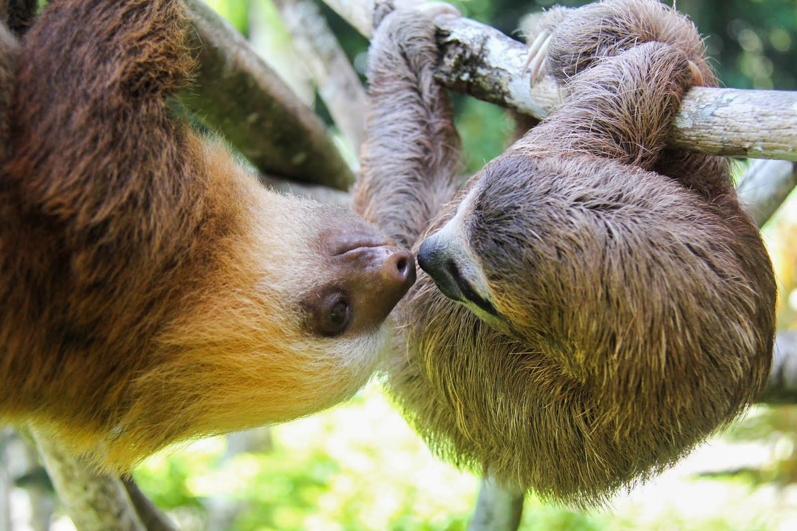 kissing kisses